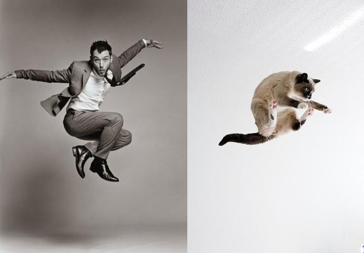 Cats Recreate Awkward Model Poses4