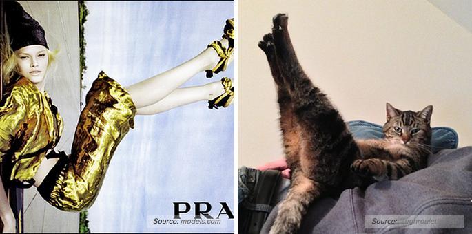 Cats Recreate Awkward Model Poses3