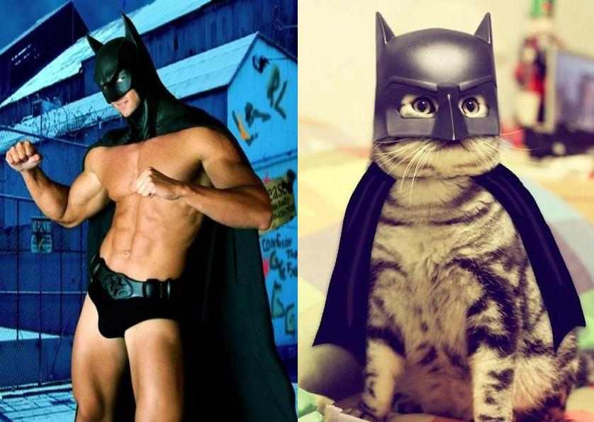 Cats Recreate Awkward Model Poses6