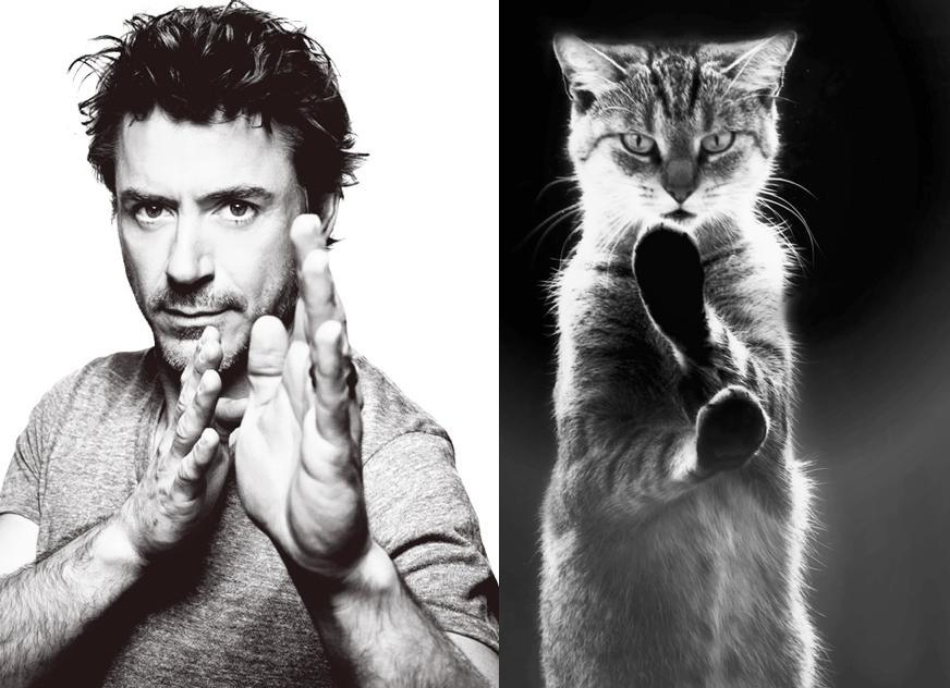 Cats Recreate Awkward Model Poses8