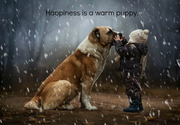 Dogs and Humans