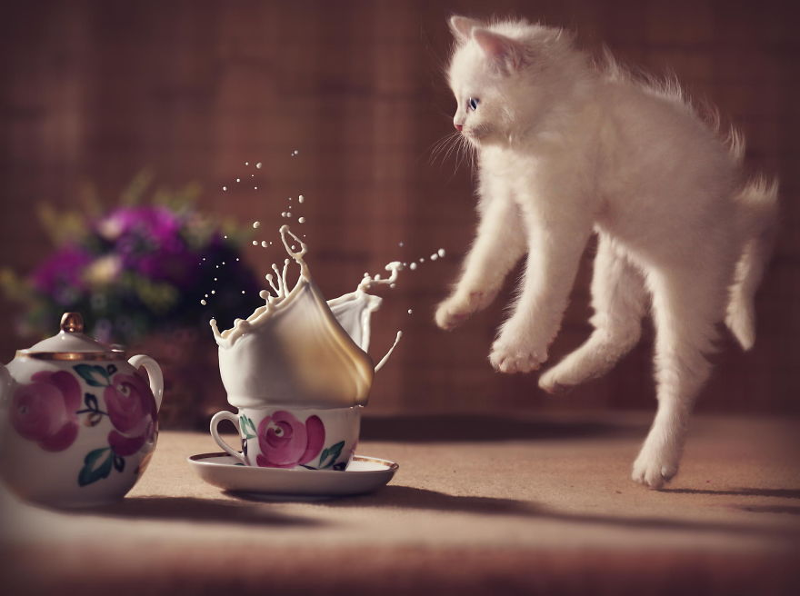 Jumping Cat 1