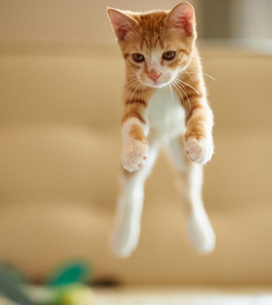 Jumping Cat 13