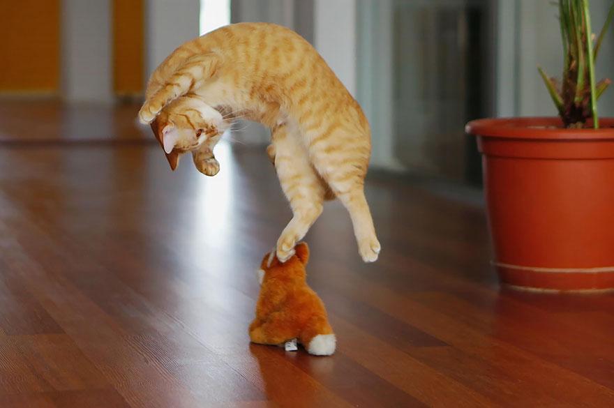Jumping Cat 14