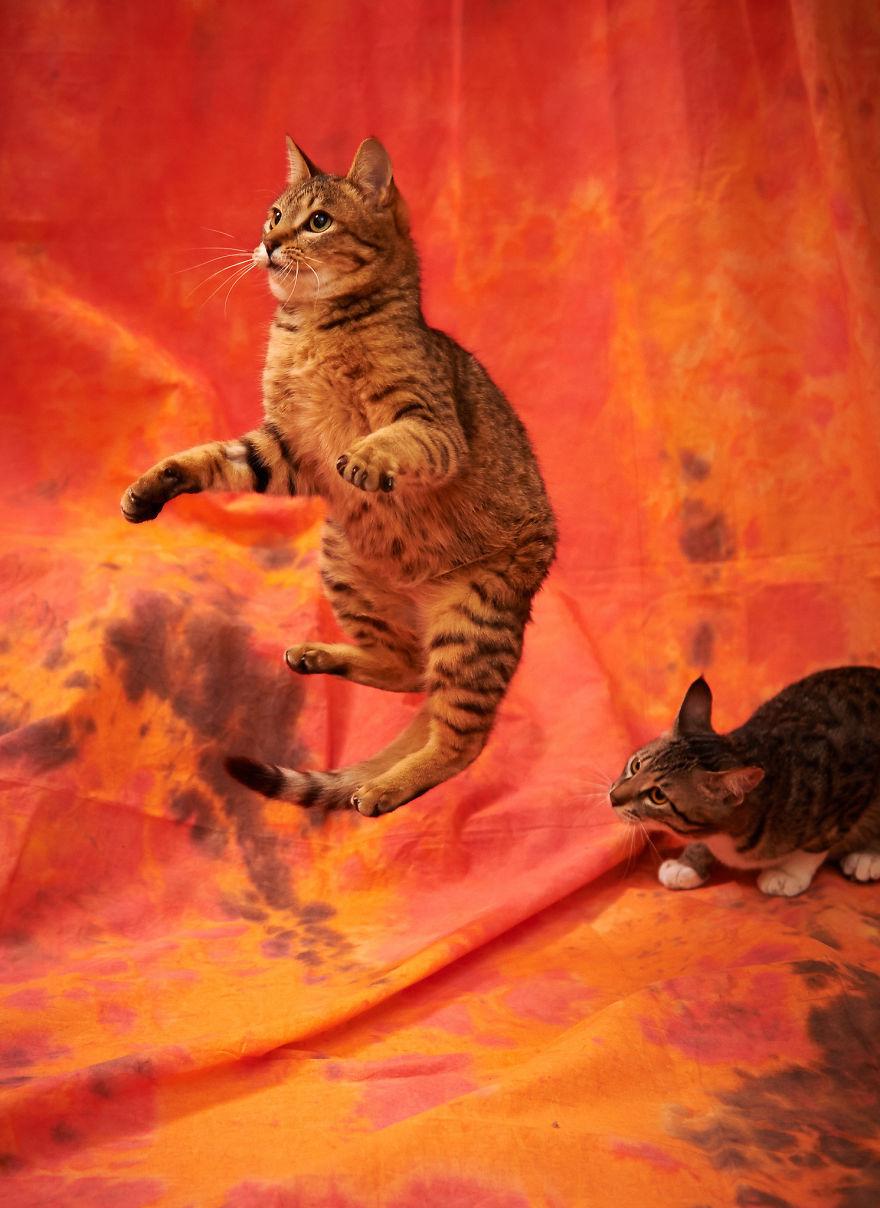 Jumping Cat 15