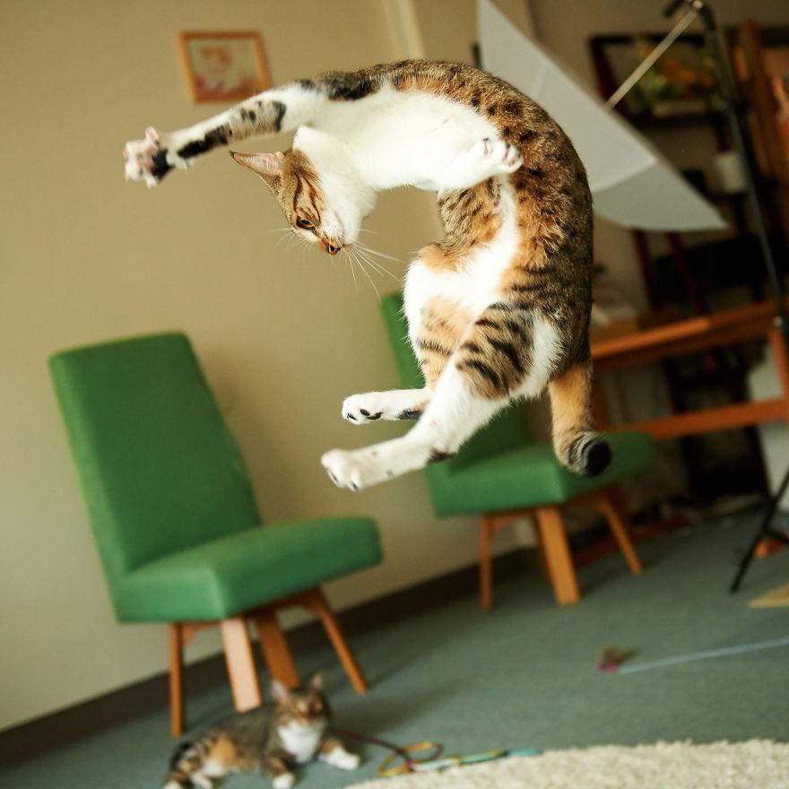 Jumping Cat 17
