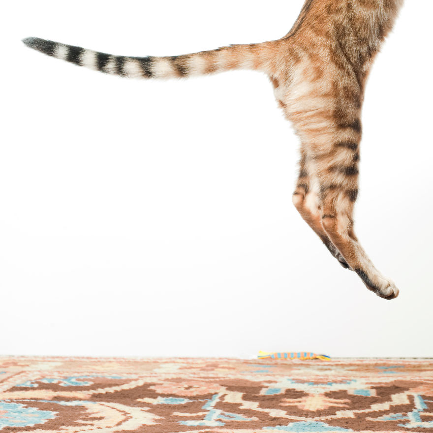 Jumping Cat 18