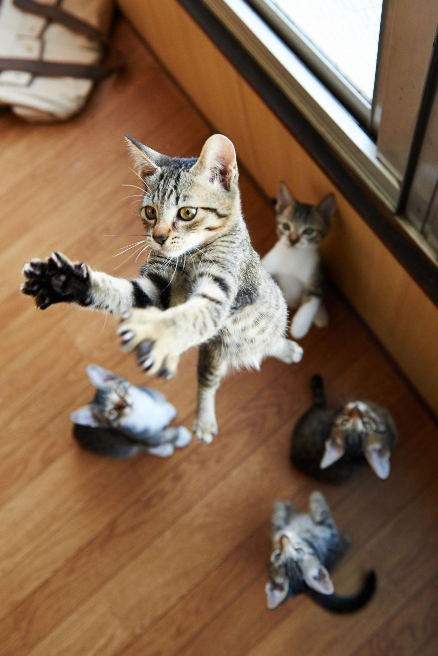 Jumping Cat 19