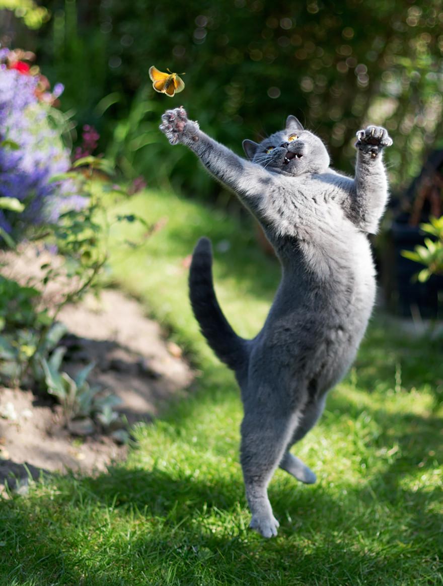 Jumping Cat 4