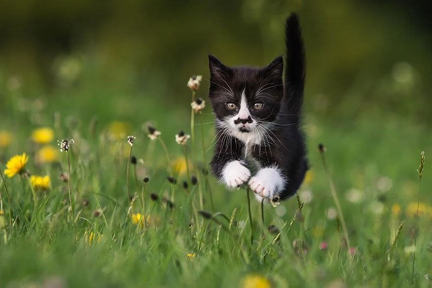 Jumping Cat 5