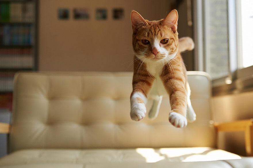Jumping Cat 6