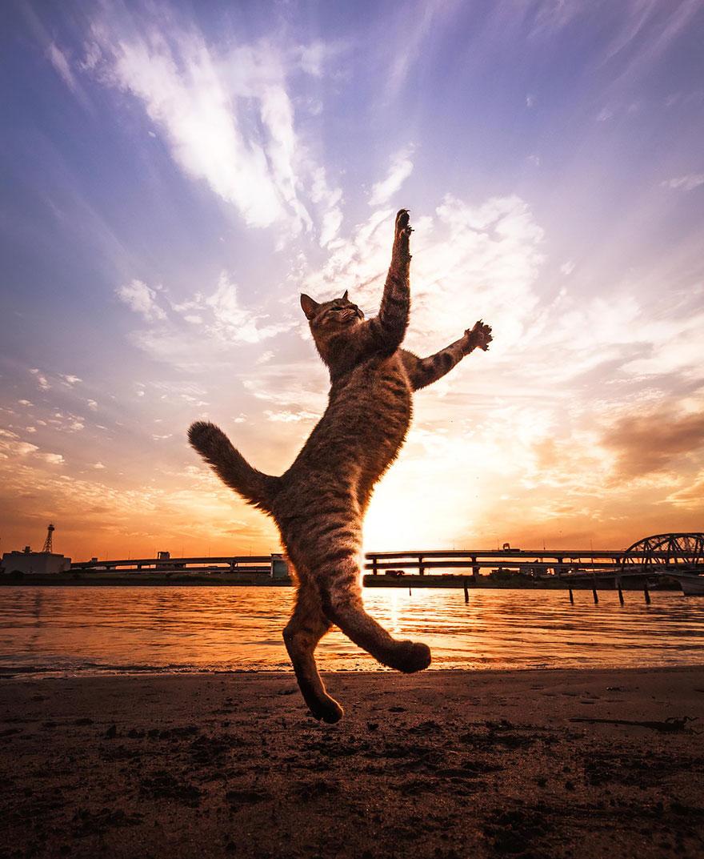 Jumping Cat 7