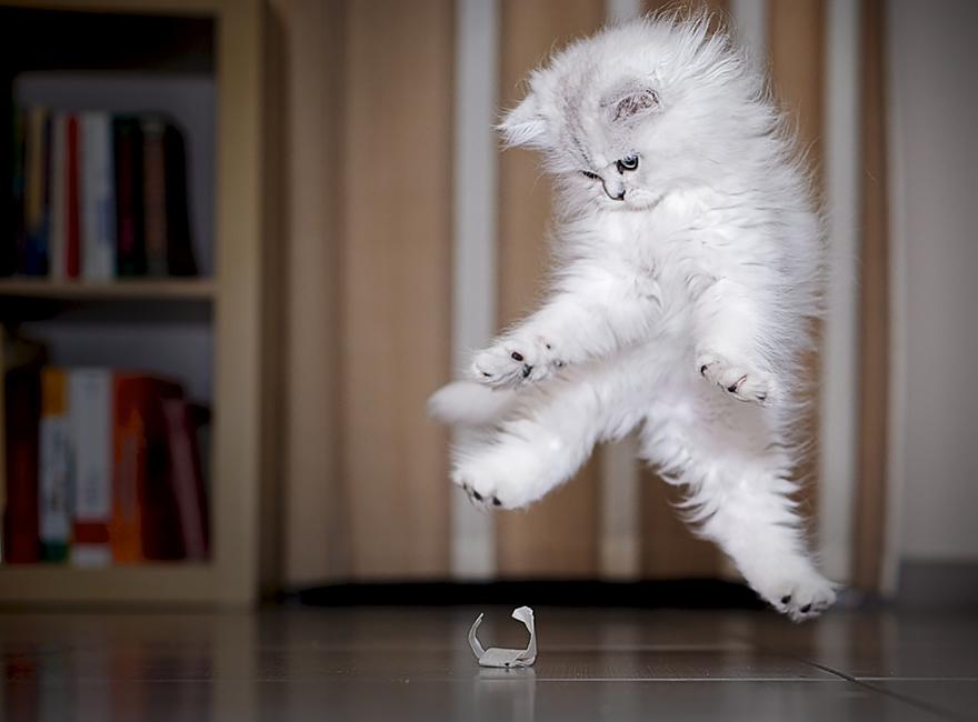 Jumping Cat 8