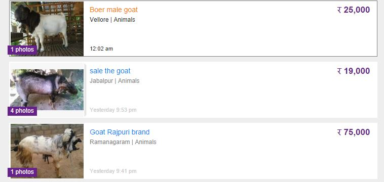 Goat Ads on OLX