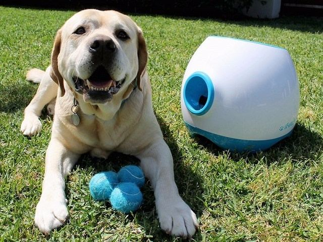 best pet gadgets