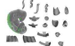 Scientists Manage to Hack Cells to Create Complex 3D Shapes