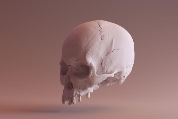 Researchers to Help Match Unidentified Skulls with Digital Face Images