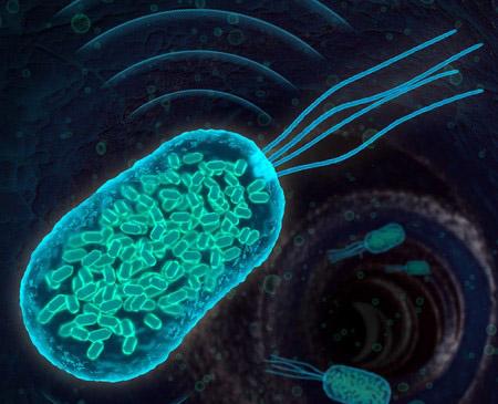 bacteria water dwelling sonar