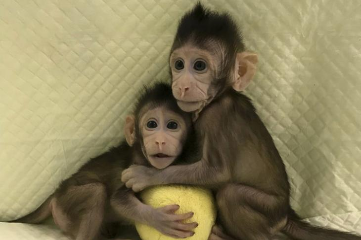 Scientists Evaluate Human Duplicates After Cloning Monkeys For The First Time