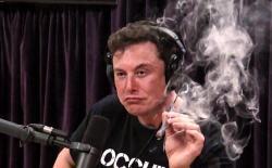 Musk web
