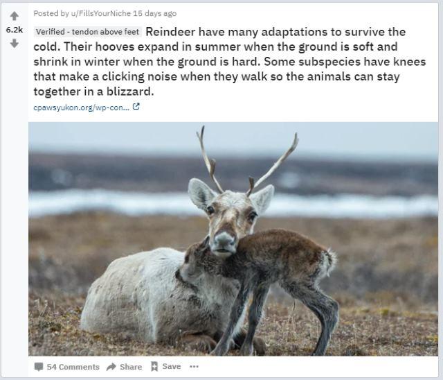 awwductional reddit