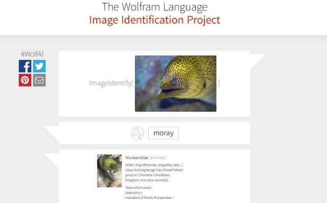 Moray Eel WIP