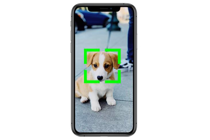 iphone recognise dogs cats featured
