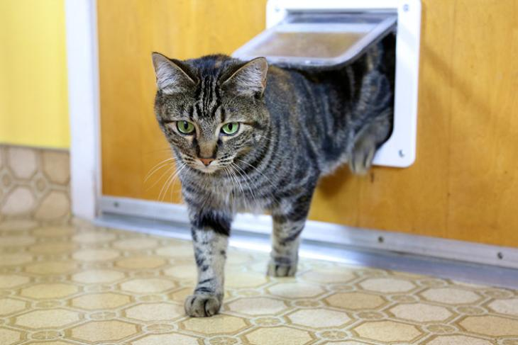 ai powered cat flap