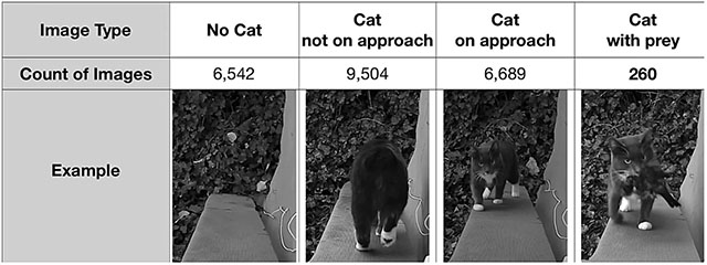 An Amazon Engineer Made an AI Cat Flap to Stop His Cat from Bringing Dead Animals Inside