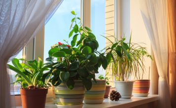 potted plants don't improve indoor air quality, reveal researchers