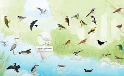 bird website feat.