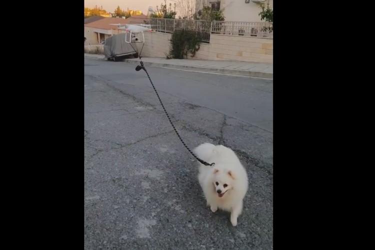 drone walking dog feat.