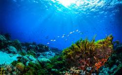 Coral reefs NASA feat.