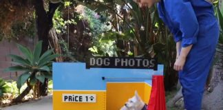 Dog selfie booth legos feat.