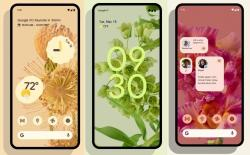 Download Pixel 6 and 6 Pro Flower and Plant-Themed Wallpapers Right Here!